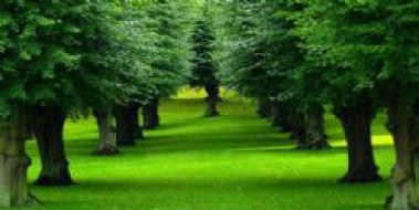 Rüyada Yeşil Göl Görmek Rüya Yorumu Ve Anlamı Yesilgentr